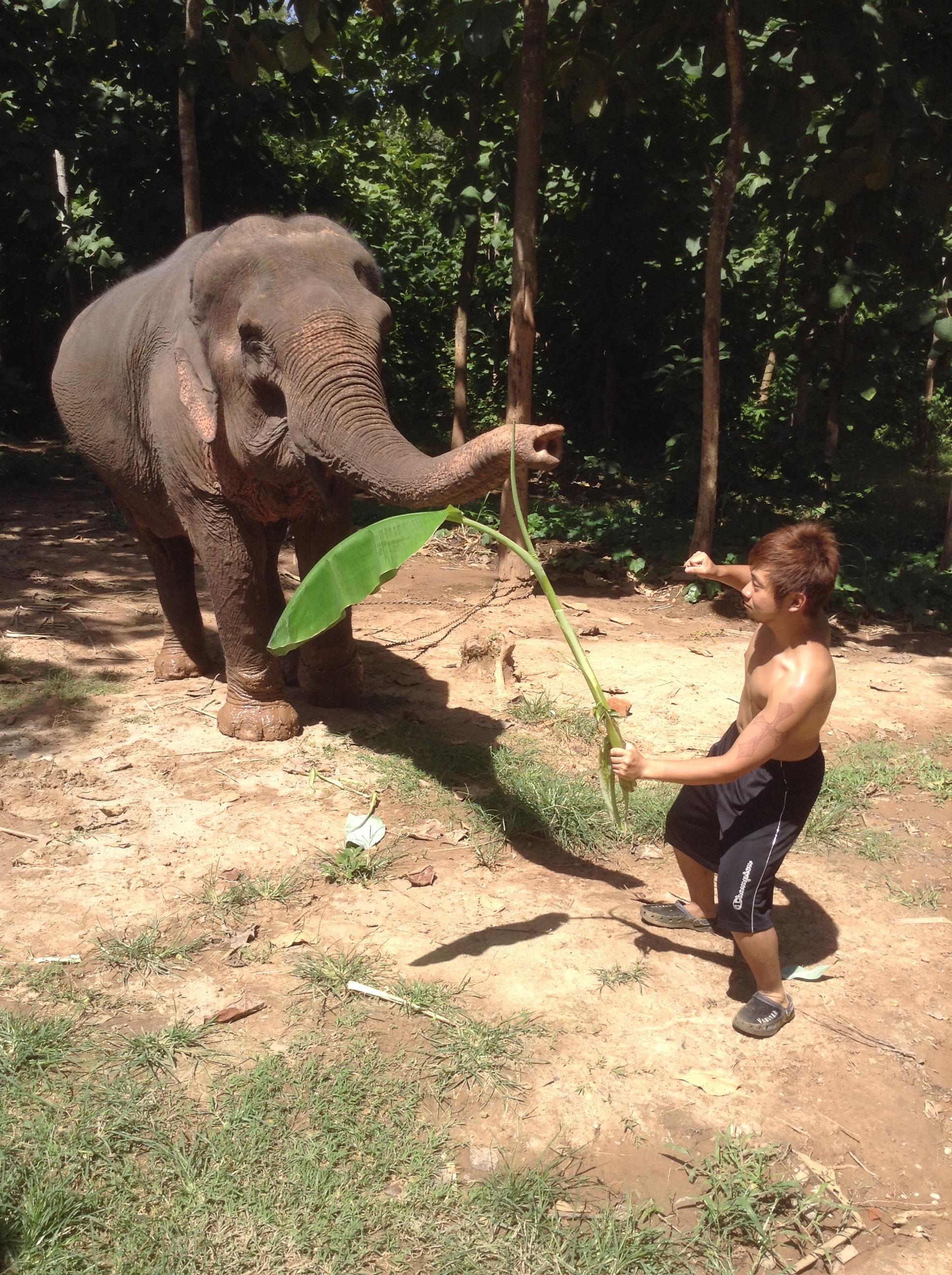 elephant attacked