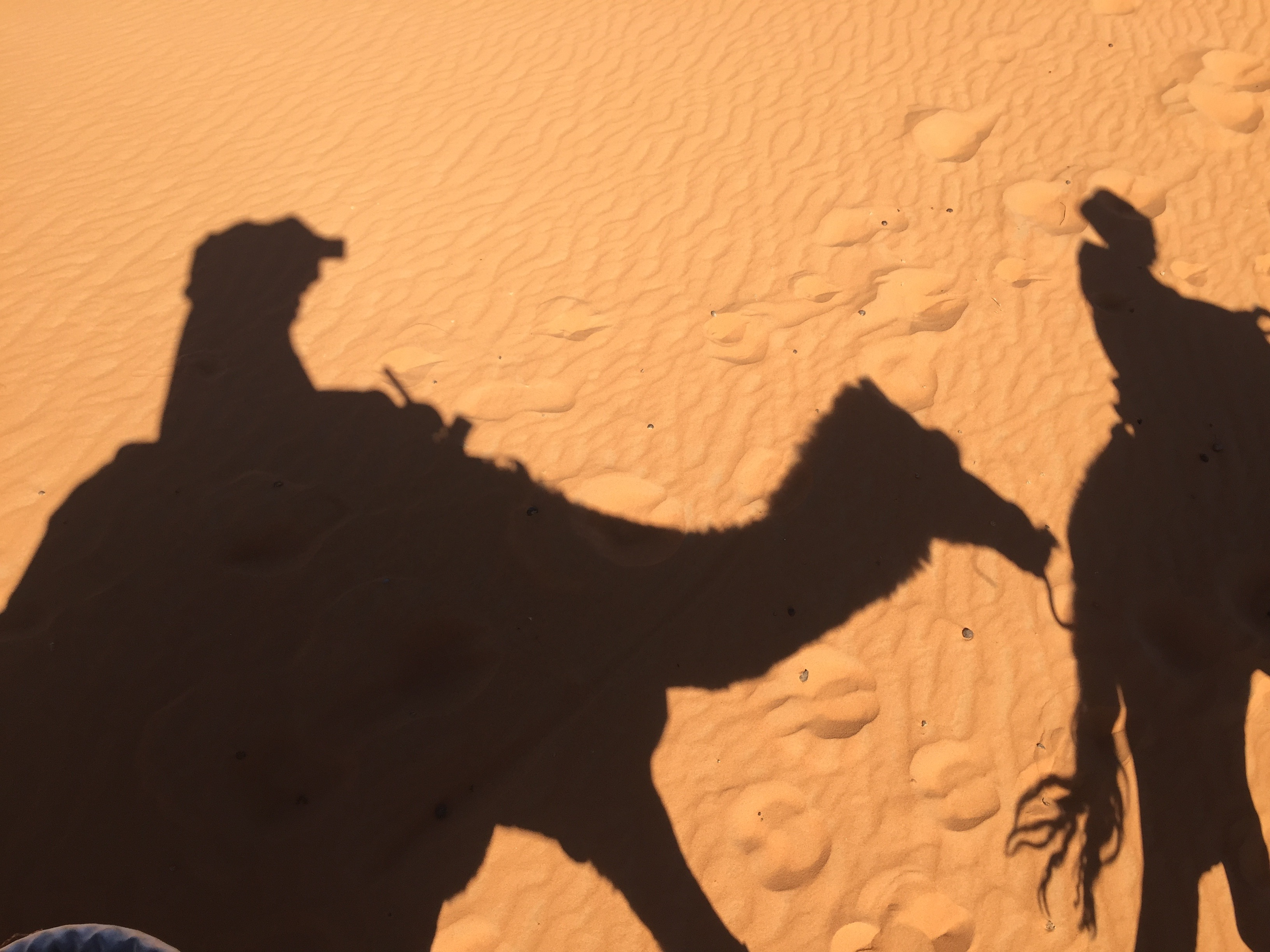 shade of camels