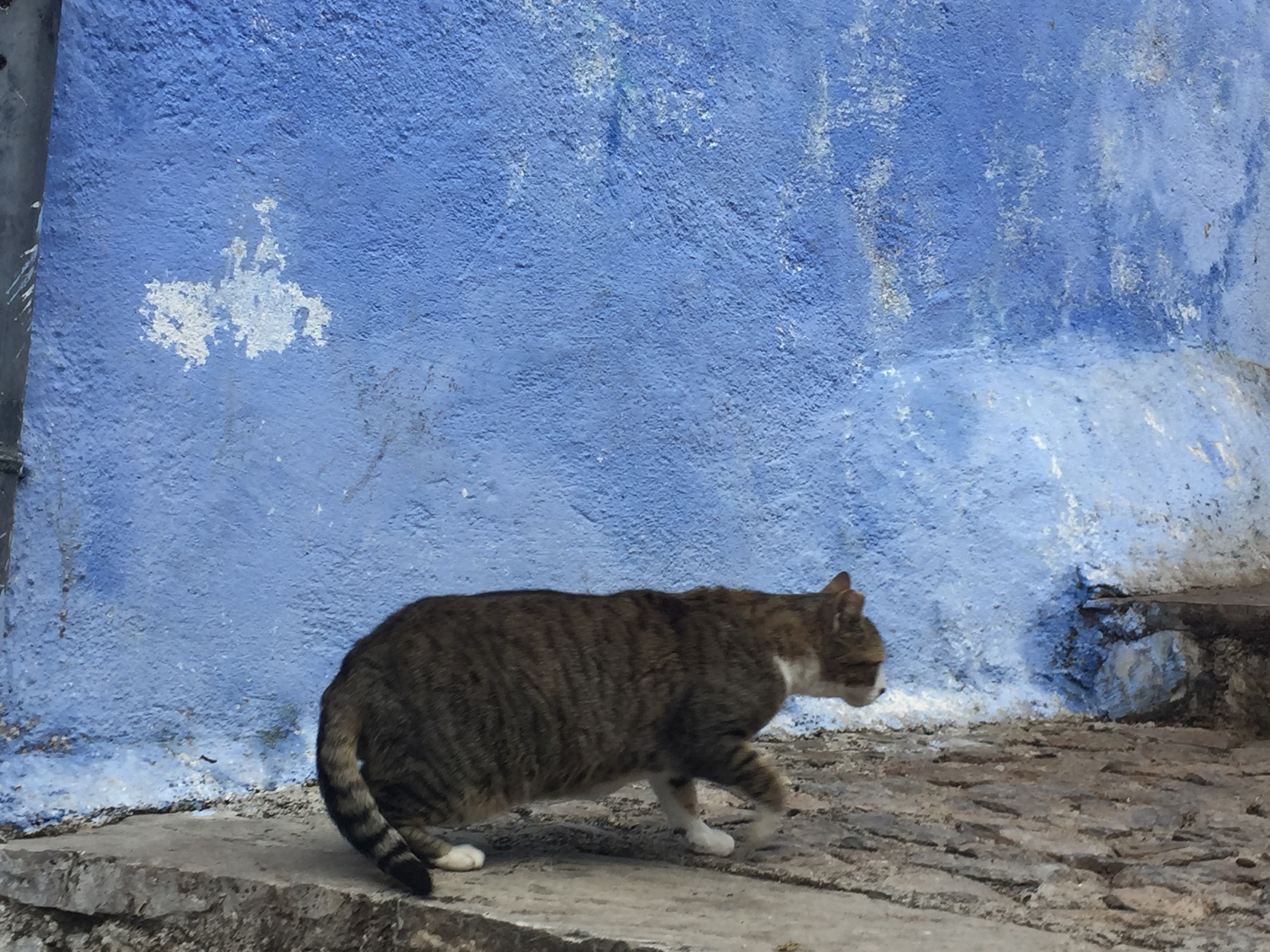 cat-in-bluewall
