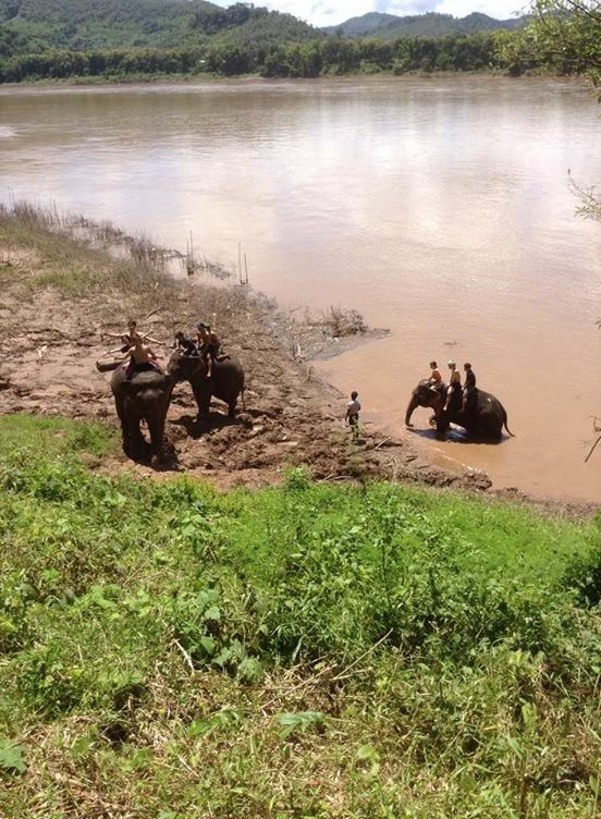 in river with elephant