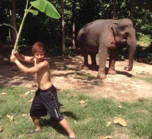 elephant mahout